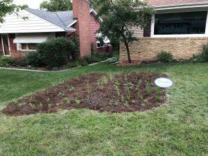 Installed rain garden